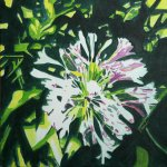 """Agapanthus"" acrylic on canvas 50x50cm"